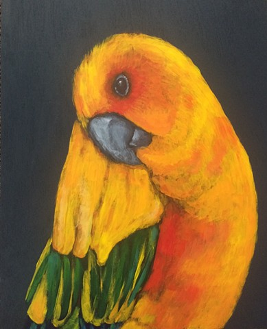 Golden parakeet