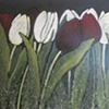 Maroon and white tulips
