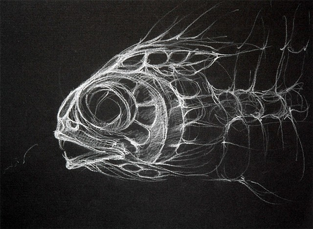 Fish Skeleton Sketch 2