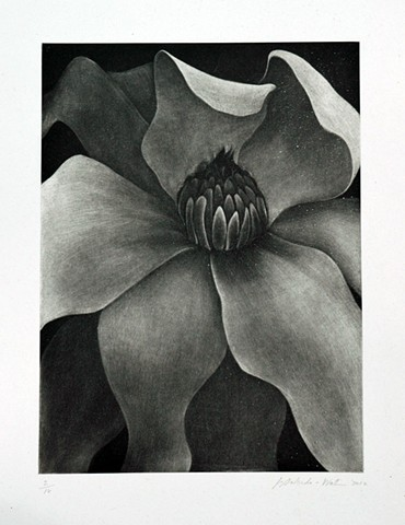 Magnolia aquatint