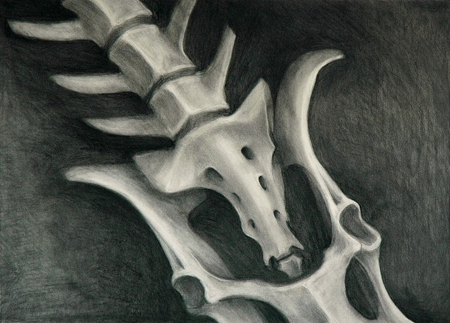 Pelvis and vertebrae