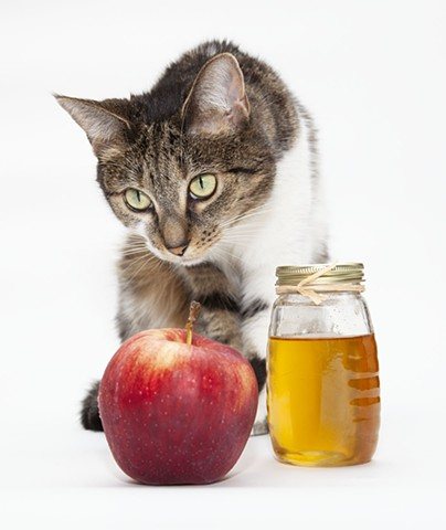 white and tabby cat on white background with red apple and bottle of honey