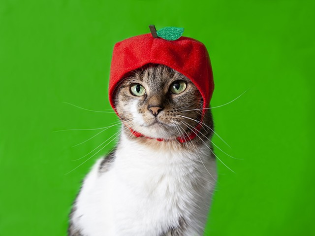 white and tabby cat on bright green background wearing red apple hat