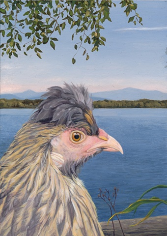 Oil painting on panel of a chicken in a landscape at North Hero on Lake Champlain by artist Chantelle Norton.