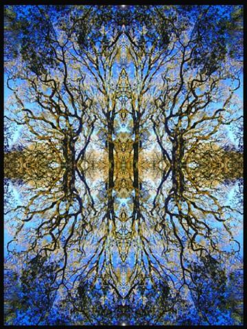 curlycue branches, fibonacci unfolding, breathtaking beauty of trees