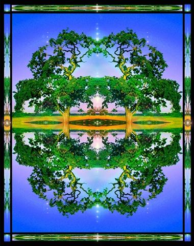 oak tree mandala, crop circles, symmetry, altar art