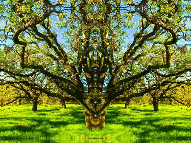 Tree embrace, tree hugs, open arms, tree heart