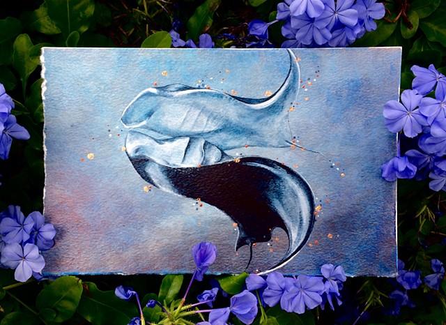 manta rays print