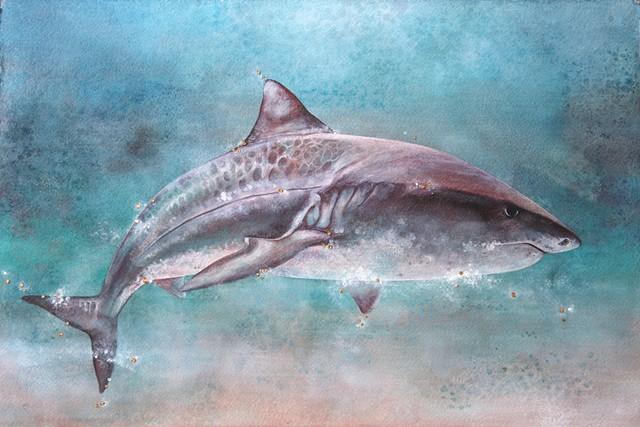 shark print; niuhi