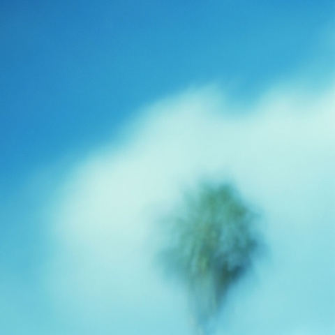 """Palm (Pinhole #3)"