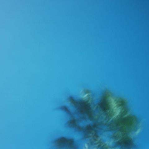 """Palm (Pinhole #1)"