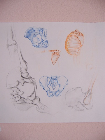 Studio Anatomico per Dal Abisso (Anatomic study for Out of the Abyss)