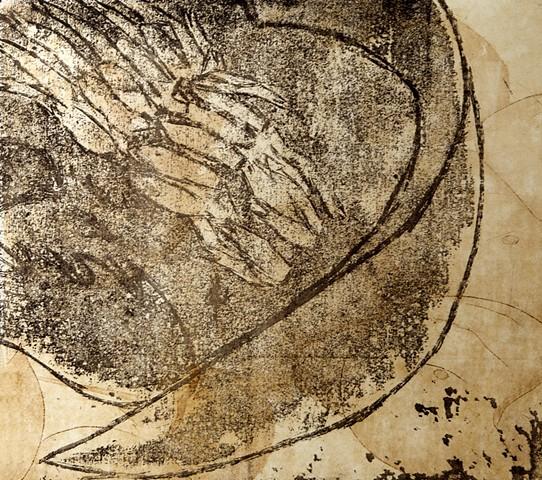 Large horseshoe crab etching and monoprint, prehistoric life, coastal ecology, natural history by Chelsea Clarke