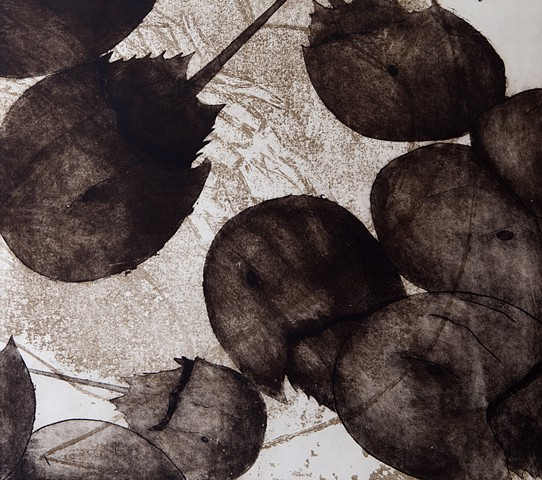 Multi-layered etching of horseshoe crabs, evolution, adaptation, and living fossils by Chelsea Clarke
