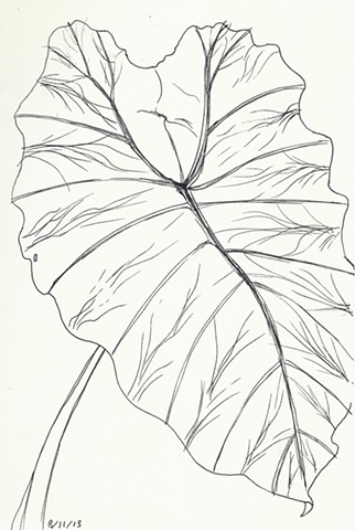 pen and ink elephant ear plant botanical study by chelsea clarke