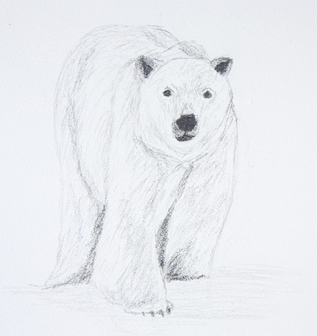 life drawing of a polar bear on the arctic sea ice from a Woods Hole Oceanographic research cruise on the US Coast Guard icebreaker Healy