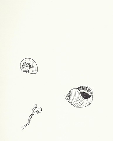 pen and ink seashell and seaweed studies by chelsea clarke