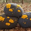 Fieldstone Pillows Yellow Family