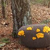 Fieldstone Pillow Yellow #3