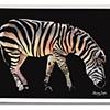 Rainbow Zebra One