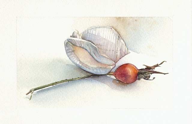 Shell and Rosehip
