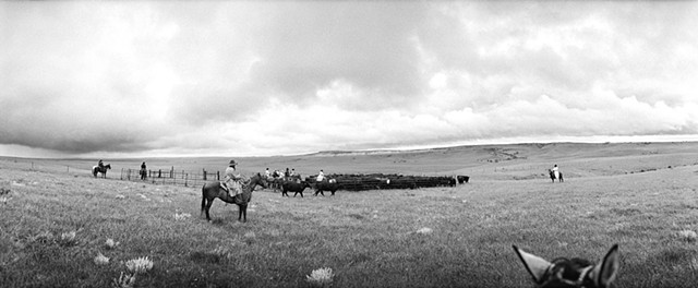 My Ranching Life by Jean Laughton