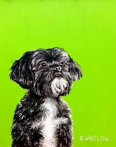"""I like to think I'm a good person, but the truth is I'm amazing."" - Tag.  Original pet portrait by Beth Whitlow"
