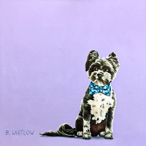 """Regular grooming is a must.  This coat is part of the hustle."" - Drake.  Whimsical Pet Dog Portrait Pomeranian Yorkie Mix"