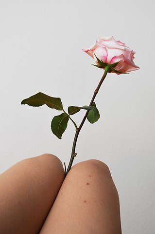 photograph of pink rose and woman legs bites by Robyn LeRoy-Evans