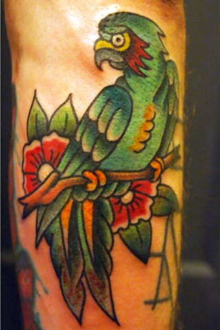 Parrot tattoo by Bradley Delay