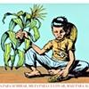 Tierra Para Sembrar, Milpa Para Cultivar, Maiz Para Alimentar