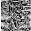 Rapto del Emigrante (Abduction of the Immigrant)