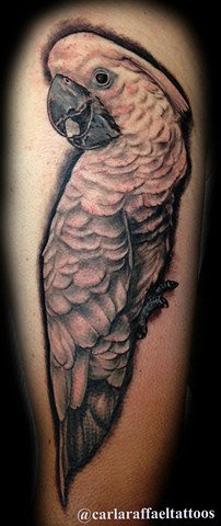 cockatoo bird tattoo strange world tattoo Calgary