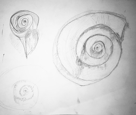 Shell form studies