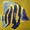 SEA TROPICAL FISH