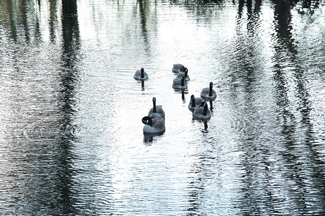 gaggle walk no. 1