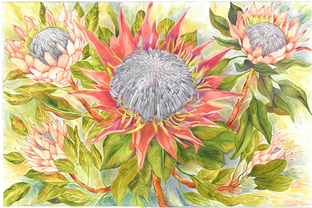 Donna Essig original watercolor proteas flowers