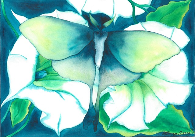 Donna Essig watercolor Luna Moth Moonflower