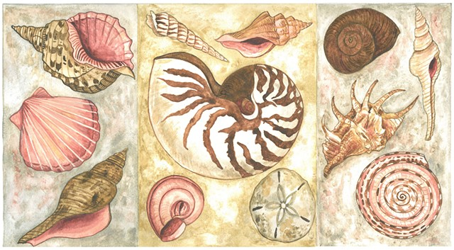 Donna Essig painting watercolor seashells