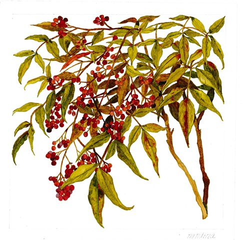 nandina branch watercolor