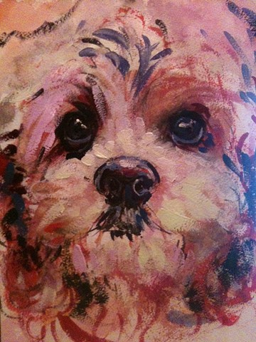 Cockapoo--SOLD