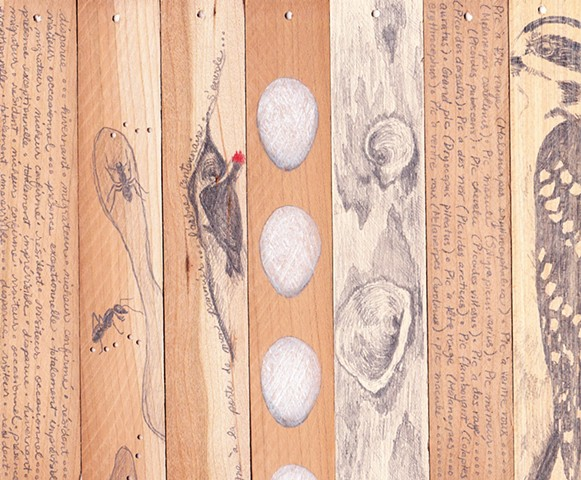 Woodpecker art