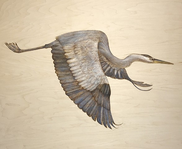 Great Blue Heron, III