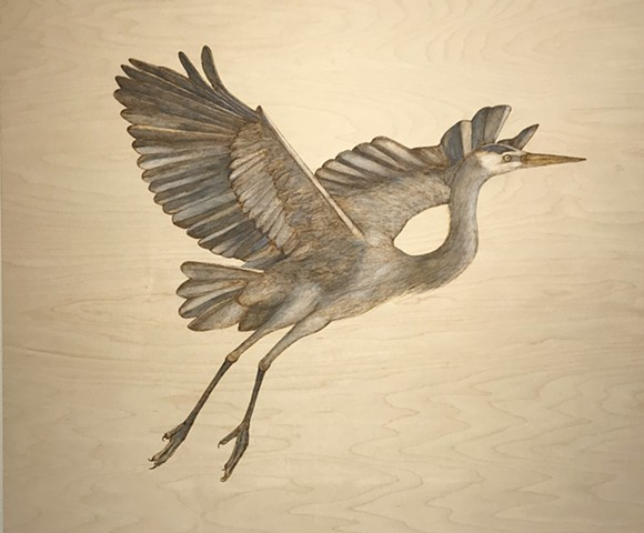 Great Blue Heron, I