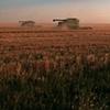 Wheat warriors, Kansas