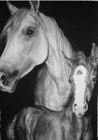 Equine Drawings, Equine Art, Equine, Horse Art