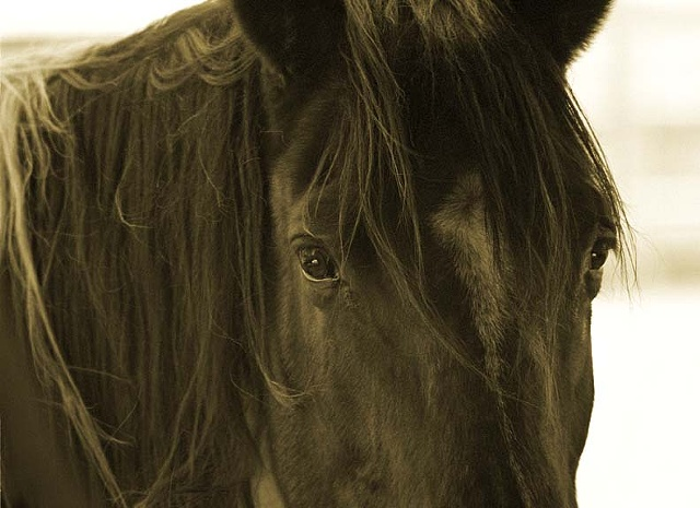 equine Photography, Equine Prints