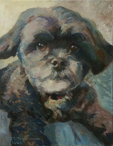 Dog art pet portrait painting of Poodle Shih Tzu mix, Shihpoo