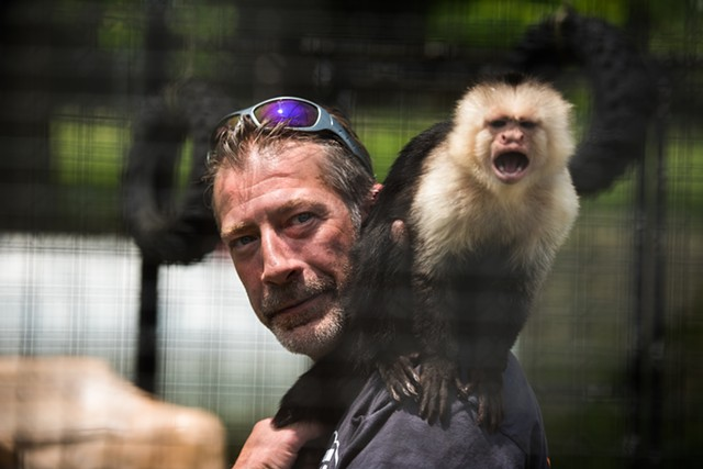 Pia, a 15 year-old white headed Capuchin monkey, is handled inside her cage by Jeff Sanders at East Coast Exotic Animal Rescue after the rescue re-opened from being damaged by fire one year ago.