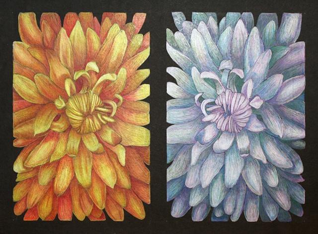 Opposite Flowers